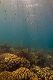 Underwater Bonaire poster