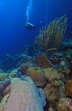 Underwater diver poster