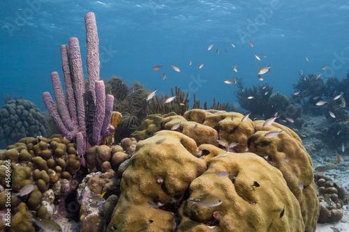 Papiers peints Recifs coralliens Underwater Bonaire