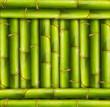 Bamboo frame background