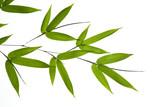 Fototapety bamboo- leaves