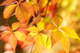 Autumn leaves on abstract blurred background