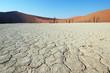 White Desert - Deadvlei, Sossuvlei
