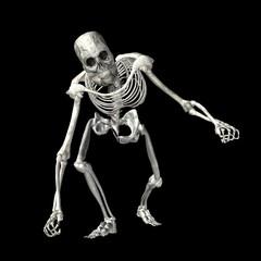 Skeleton . 6