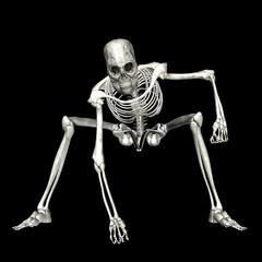 Skeleton . 5