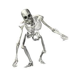 Skeleton - 6