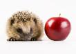 Hedgehog & Apple