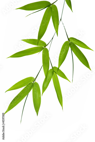 Poster bamboo- leaves