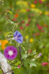 champ de fleurs 12