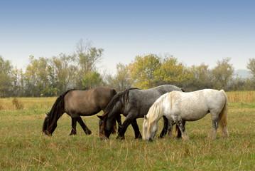 groupe de chevaux lourds