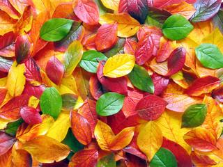 Bunter Blätterboden im Herbst