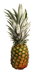 Isolated Hawaiian Pineapple