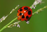 Colorful ladybird in the gardens poster