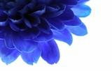 Fototapeta kompozytowych - kwiat - Kwiat