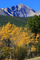 Autumn Aspens and 14,259 ft Longs Peak