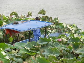 Bateau des jardiniers des lotus, Lac Hangzhou, Chine