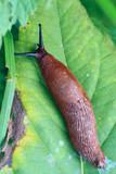 red slug #1 poster
