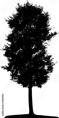 Tree (vector) - 4631056