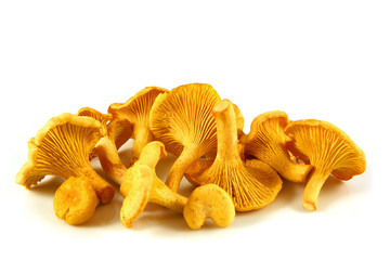 Chanterelles isolated