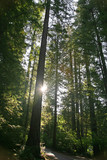 Rays of Sunshine Through Trees poster
