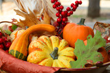 Thanksgiving Harvest Basket poster