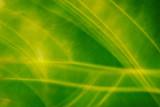 Blurred vibrant green leaf background poster
