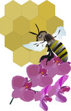 bee, flower and honeycomb poster