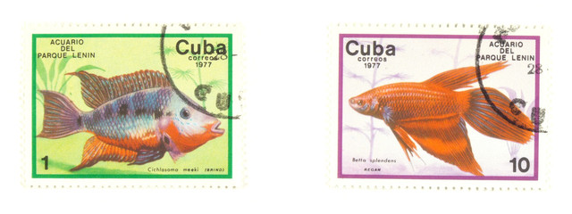 Cuba stamps with fish