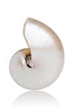 Fototapety Pearled Nautilus