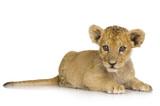Lion Cub (3 months) poster