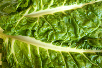 Swiss Chard - close-up