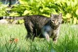 Alert tabby cat on the hunt poster