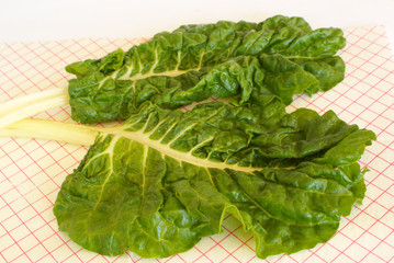 Freshly washed Swiss Chard leaves