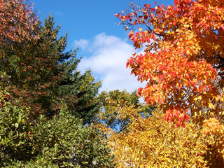 Fall Trees and Sky