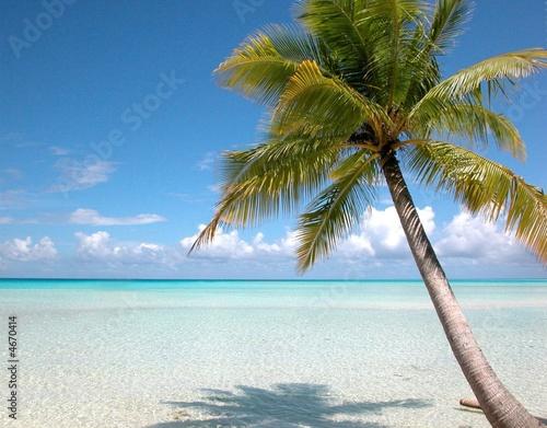 Fotobehang Centraal-Amerika Landen Plage et cocotier Iles Turkoises - Bahamas