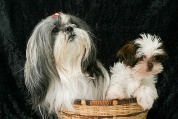 Two Dogs In A Basket 3