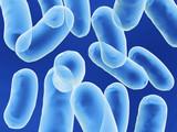 bacillus bacteria poster