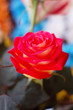 red rose with blured background