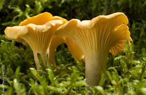 mushroom - 4677282