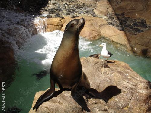 Seelöwe mit Möwe im Seaworld in San Diego beim Sonnen