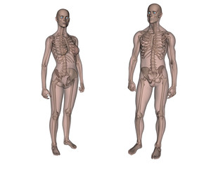 Anatomia. Scheletro maschile e femminile