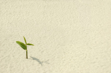 Single Plant Sprouting from a Sea of Sand