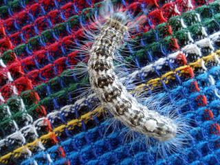 Big colour caterpillar