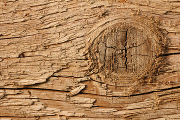 Texture of oak plank(closeup)
