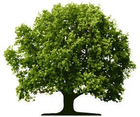 Vector tree