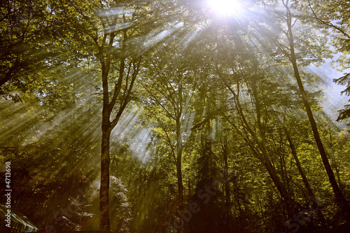 the forest lightbeam