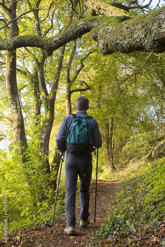 Hiker in a forest