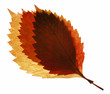 three autumn leaf