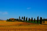 Landscape of a Italian tuscan villa and lebanese cedar trees poster