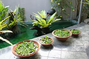 Balinese decor plants